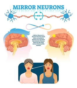Mirror neurons in brain